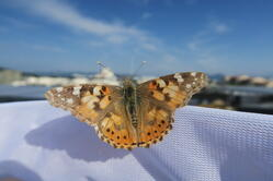 30_LJ_Butterfly_Danilo_Bevk