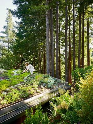 Artist Studio Overlooks Guest Cabin Rooftop Garden by Feldman Architecture
