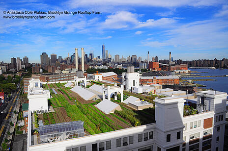 BrooklynGrange1