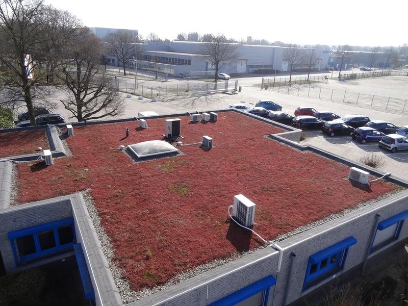 Oosterhout.jpg