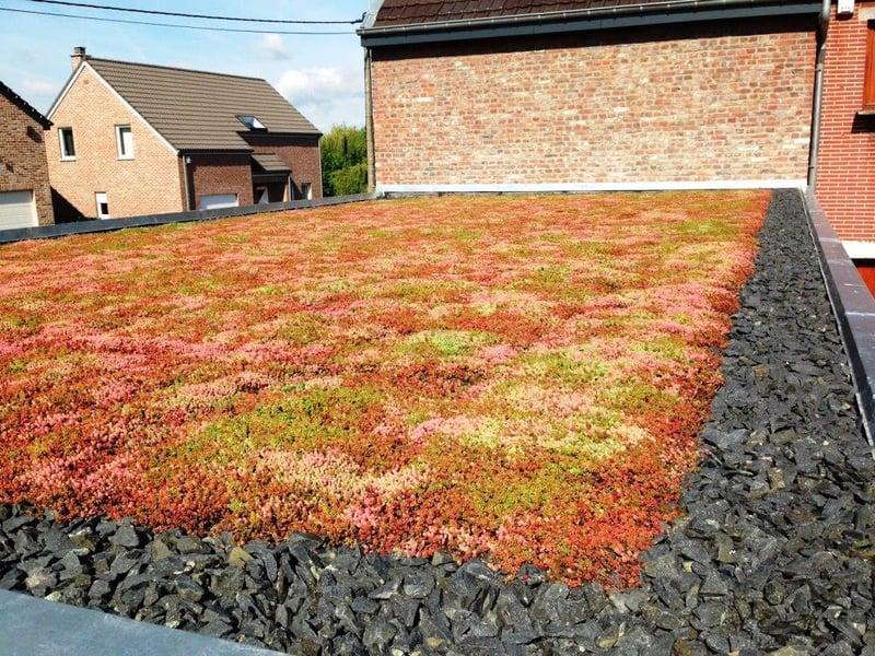 Roof_Late_Summer_S.jpg