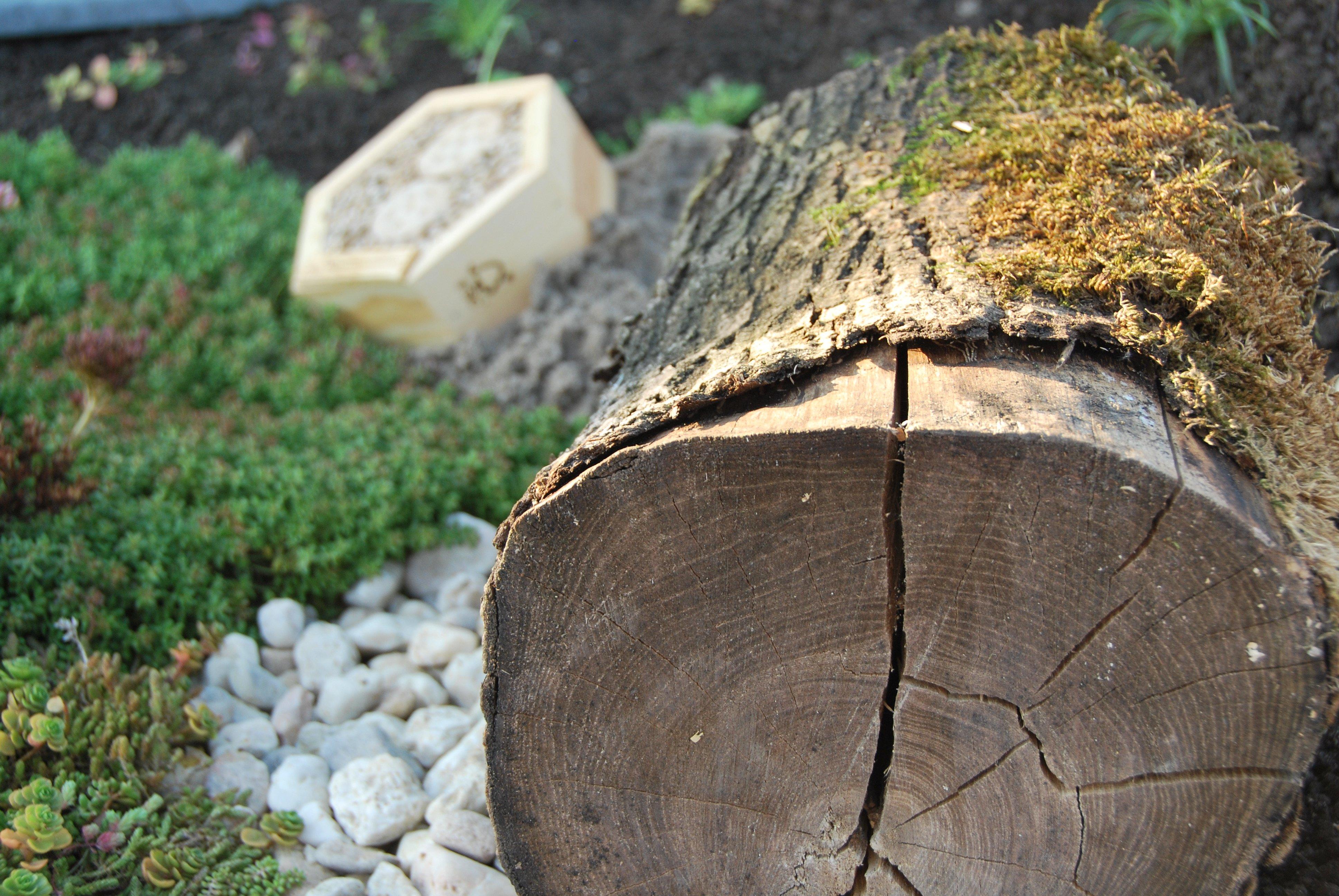 Sempergreen Biodiversiteitspakket (1)